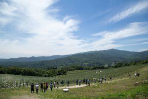 ブルゴーニュ地方を思わせる広大なかわうちワインの畑